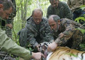 Putin amaestrando tigre